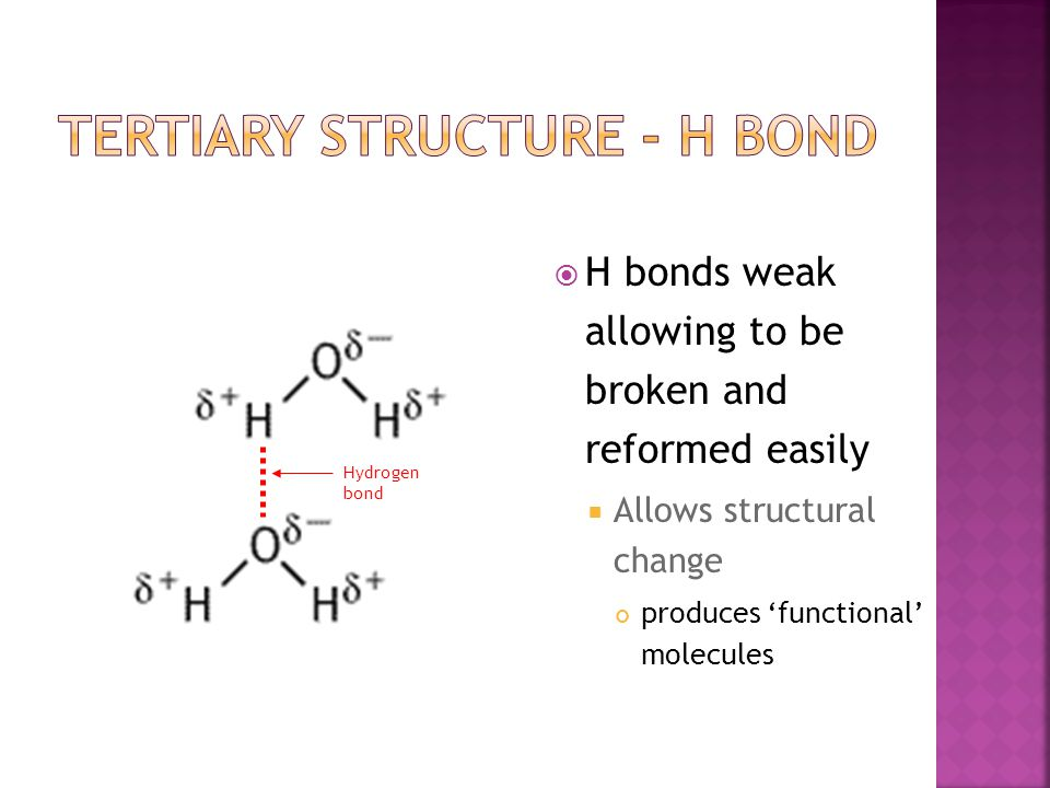  H bonds weak allowing to be broken and reformed easily  Allows structural change produces 'functional' molecules Hydrogen bond