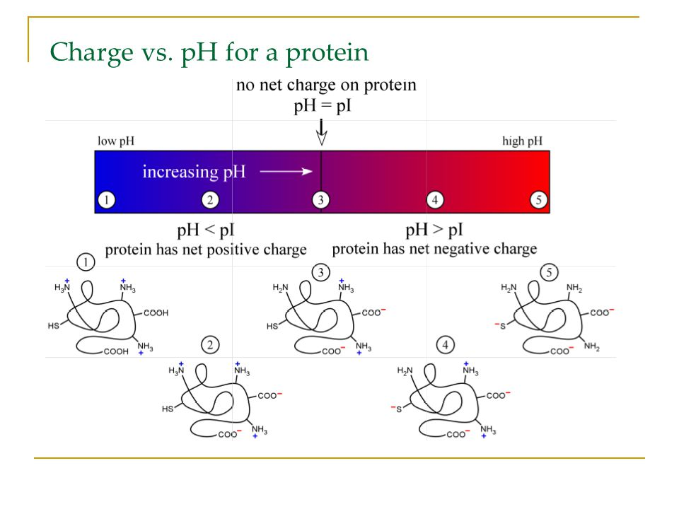 Charge vs. pH for a protein