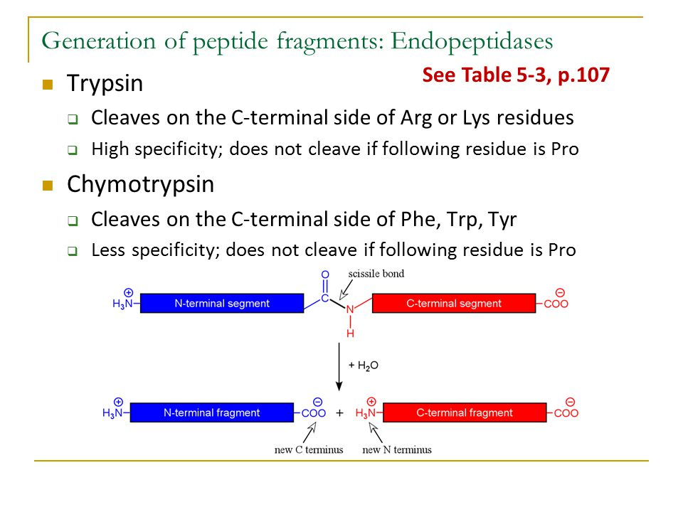 Generation of peptide fragments: Endopeptidases Trypsin  Cleaves on the C-terminal side of Arg or Lys residues  High specificity; does not cleave if following residue is Pro Chymotrypsin  Cleaves on the C-terminal side of Phe, Trp, Tyr  Less specificity; does not cleave if following residue is Pro See Table 5-3, p.107