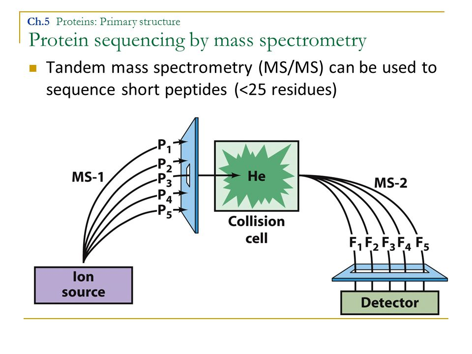 Protein sequencing by mass spectrometry Ch.5 Proteins: Primary structure Tandem mass spectrometry (MS/MS) can be used to sequence short peptides (<25 residues)