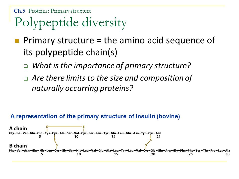 Polypeptide diversity Primary structure = the amino acid sequence of its polypeptide chain(s)  What is the importance of primary structure?  Are the