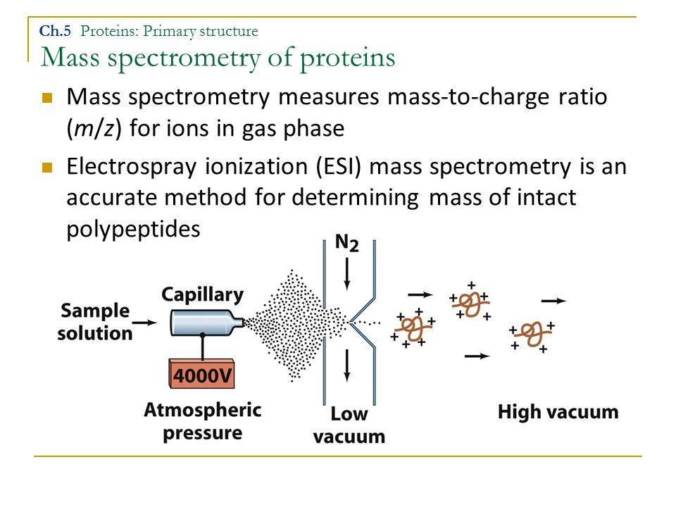 Mass spectrometry of proteins Ch.5 Proteins: Primary structure Mass spectrometry measures mass-to-charge ratio (m/z) for ions in gas phase Electrospra