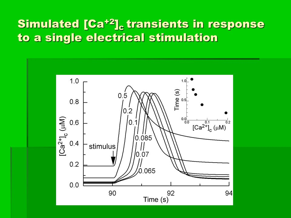 Simulated [Ca +2 ] c transients in response to a single electrical stimulation