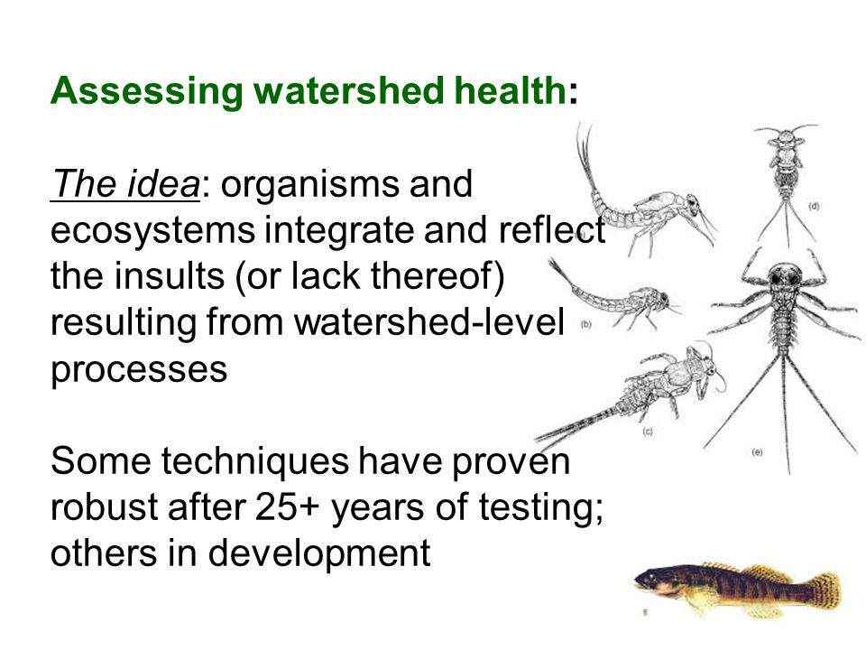 Assessing watershed health: The idea: organisms and ecosystems integrate and reflect the insults (or lack thereof) resulting from watershed-level processes Some techniques have proven robust after 25+ years of testing; others in development