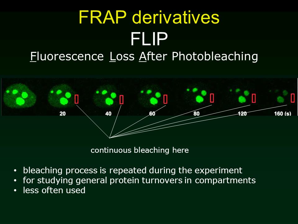 FRAP derivatives FLIP Fluorescence Loss After Photobleaching bleaching process is repeated during the experiment for studying general protein turnovers in compartments less often used continuous bleaching here