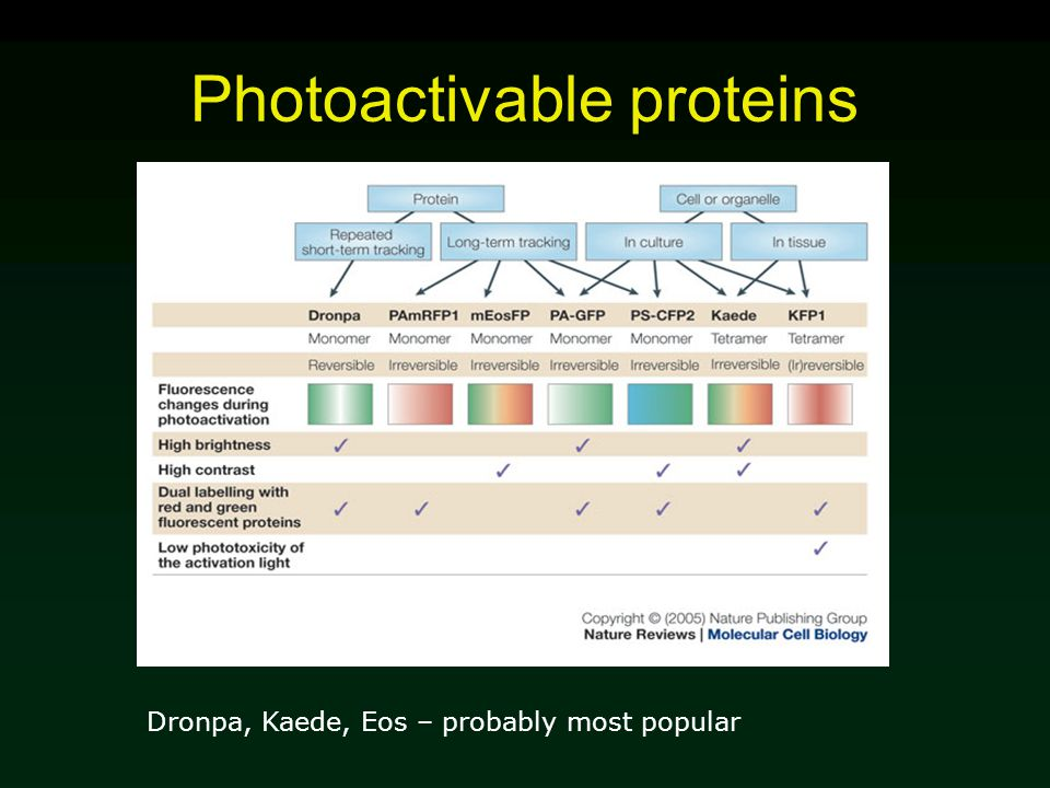 Photoactivable proteins Dronpa, Kaede, Eos – probably most popular