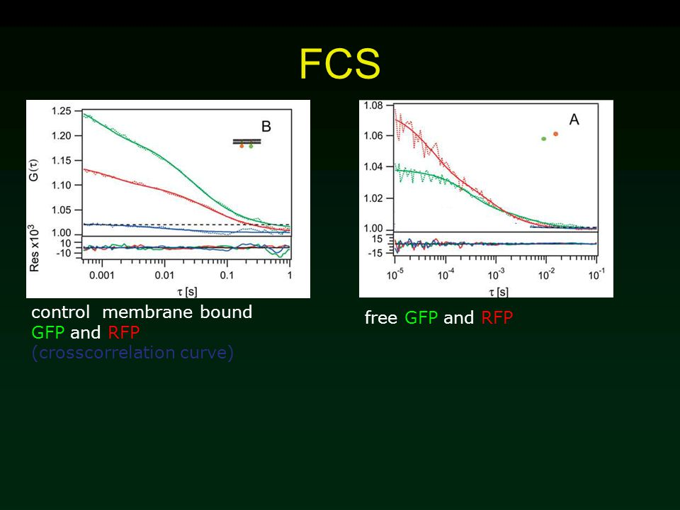 FCS control membrane bound GFP and RFP (crosscorrelation curve) free GFP and RFP