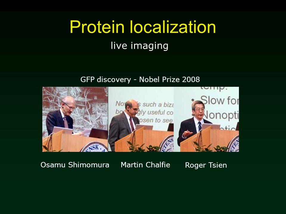 Protein localization live imaging Martin Chalfie GFP discovery - Nobel Prize 2008 Roger Tsien Osamu Shimomura