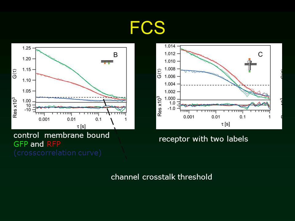 FCS control membrane bound GFP and RFP (crosscorrelation curve) receptor with two labels channel crosstalk threshold