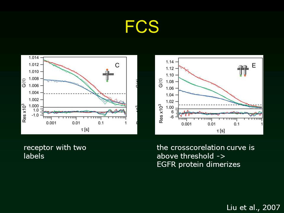 FCS receptor with two labels the crosscorelation curve is above threshold -> EGFR protein dimerizes Liu et al., 2007