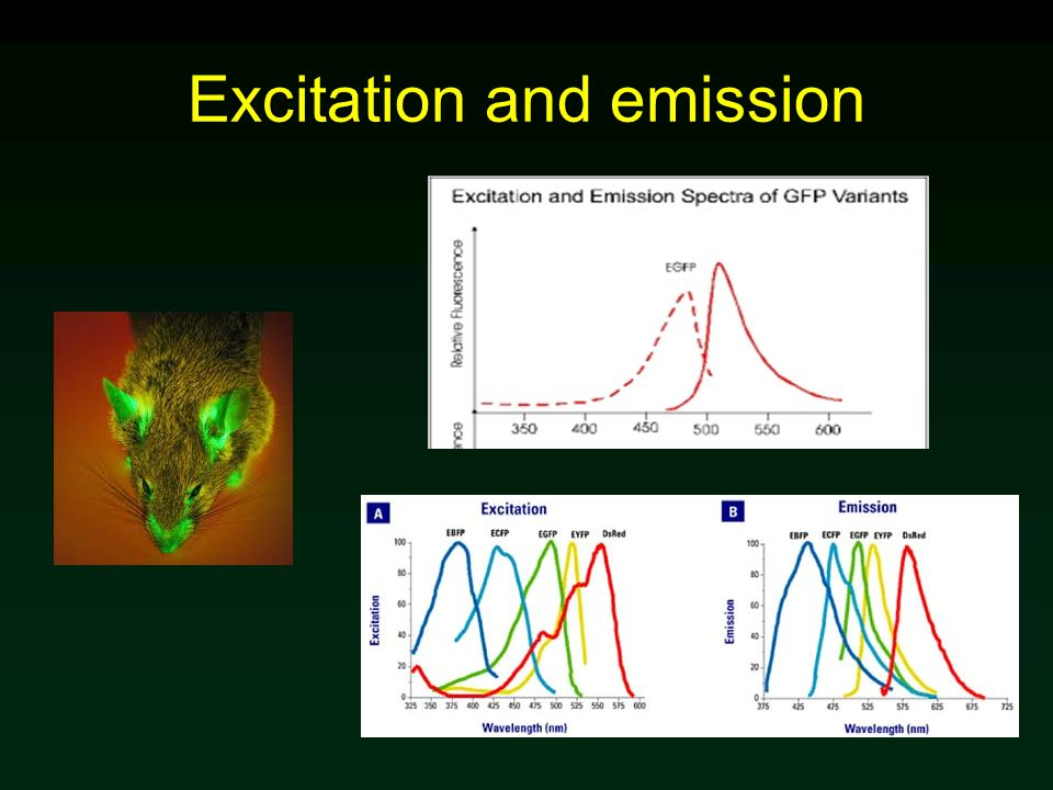 Excitation and emission