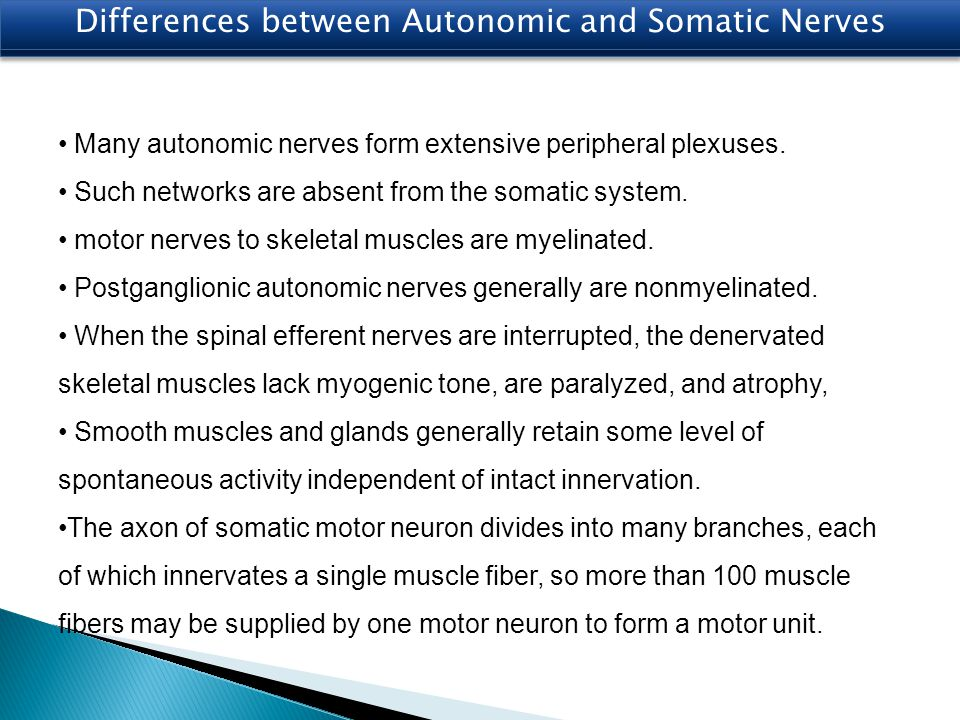 Many autonomic nerves form extensive peripheral plexuses. Such networks are absent from the somatic system. motor nerves to skeletal muscles are myeli