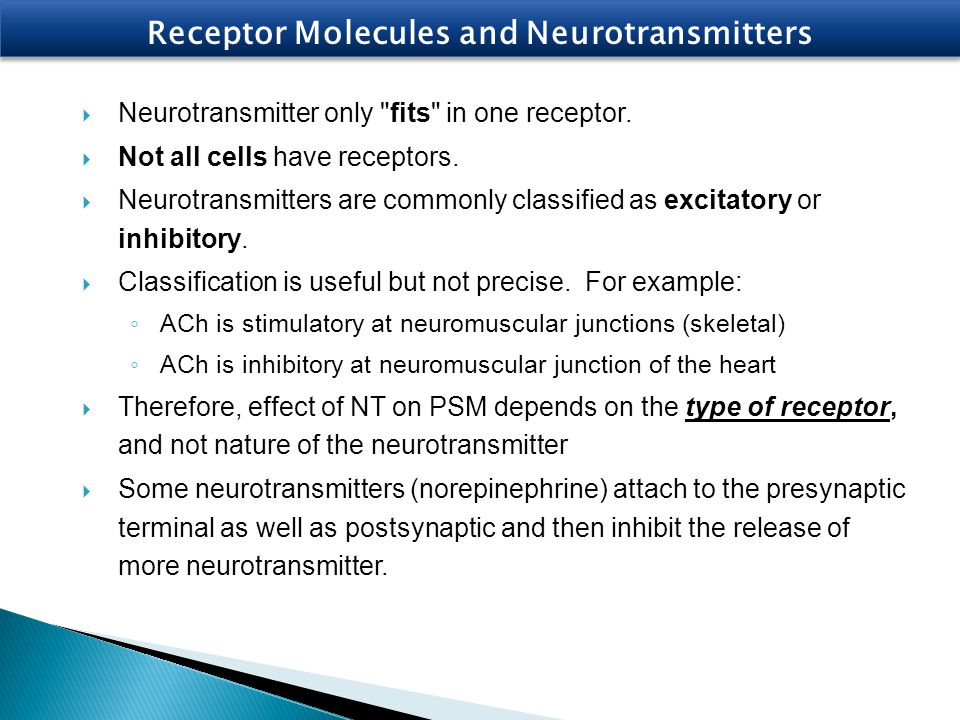 Receptor Molecules and Neurotransmitters  Neurotransmitter only
