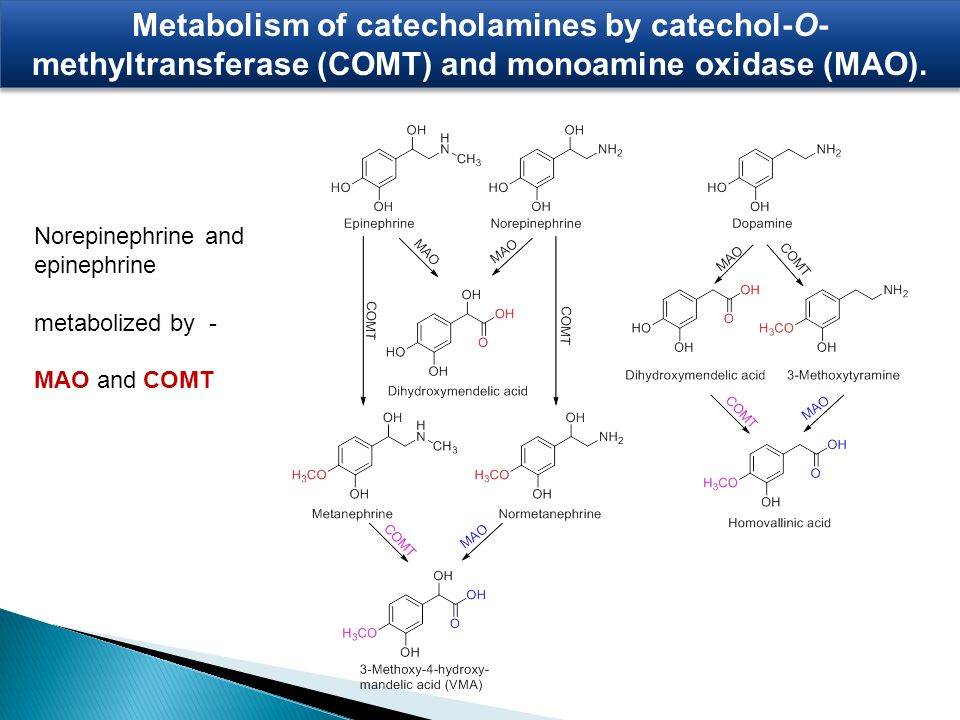 Metabolism of catecholamines by catechol-O- methyltransferase (COMT) and monoamine oxidase (MAO). Norepinephrine and epinephrine metabolized by - MAO
