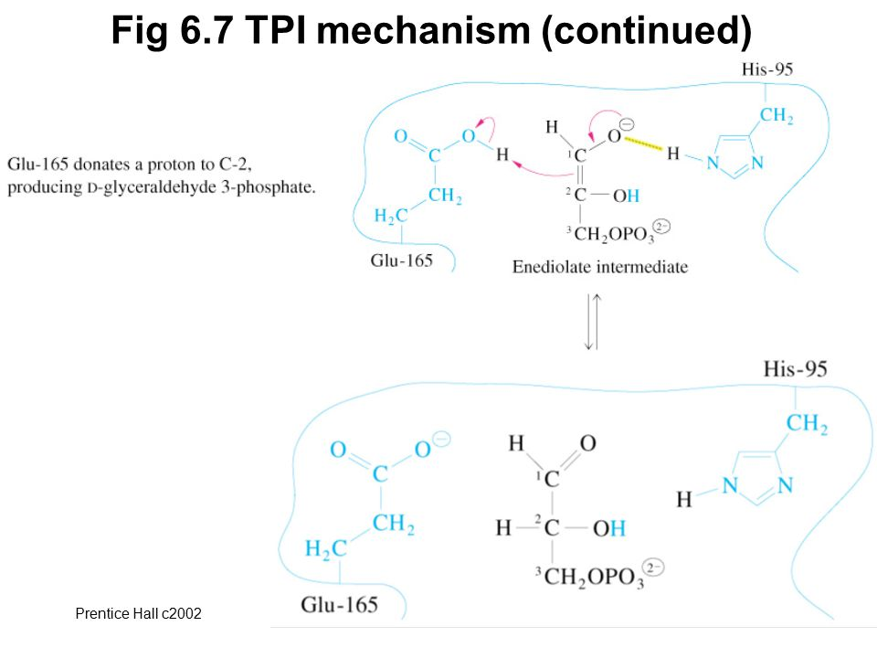 Prentice Hall c2002Chapter 632 Fig 6.7 TPI mechanism (continued)