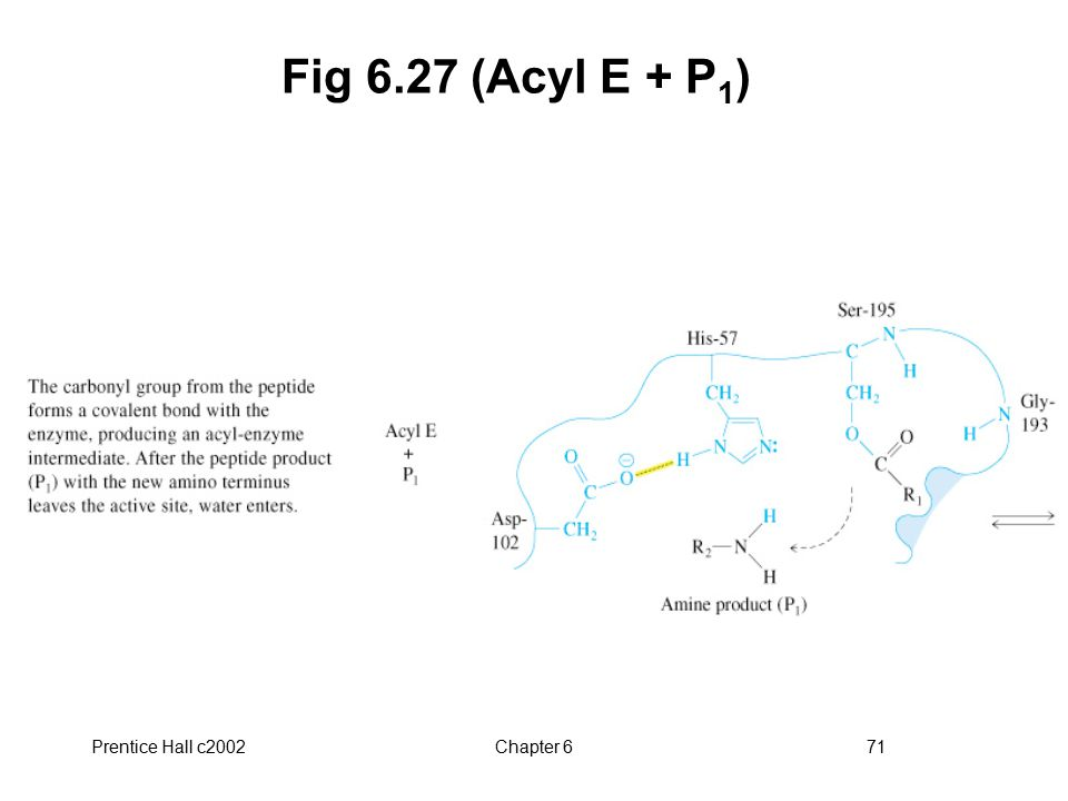 Prentice Hall c2002Chapter 671 Fig 6.27 (Acyl E + P 1 )