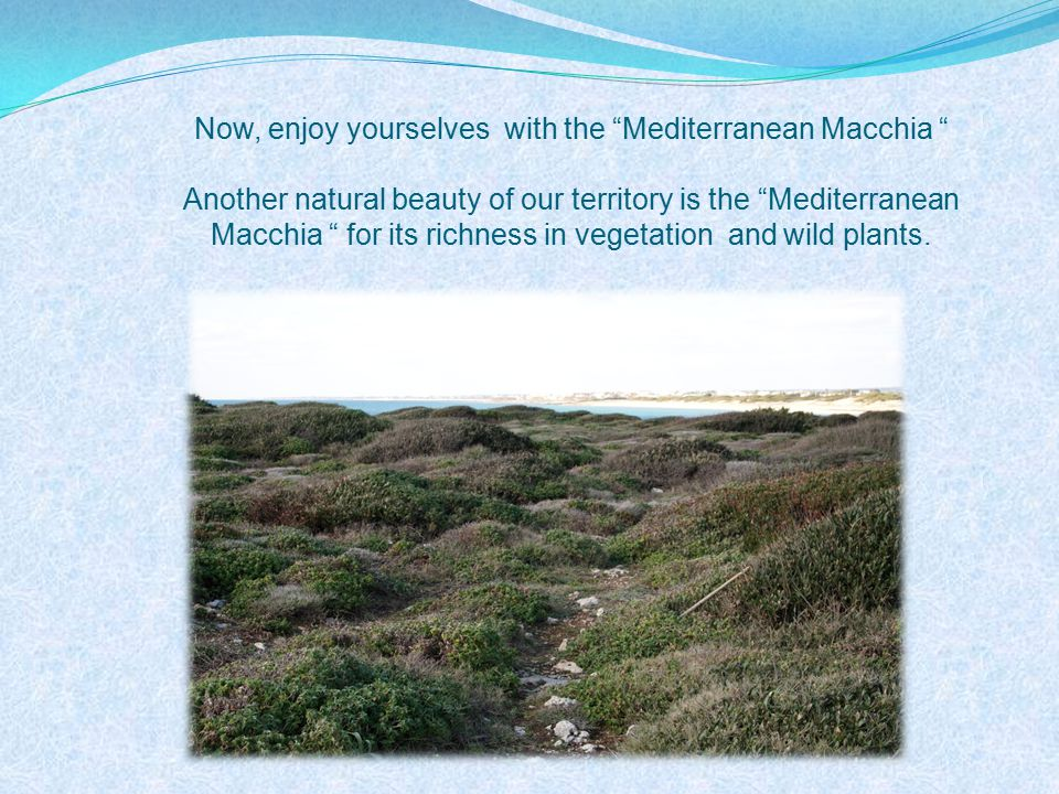 Now, enjoy yourselves with the Mediterranean Macchia Another natural beauty of our territory is the Mediterranean Macchia for its richness in vegetation and wild plants.