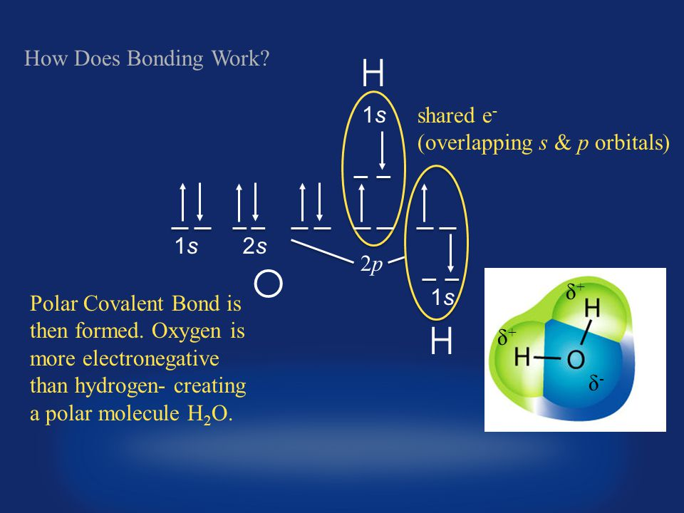 1s O How Does Bonding Work. Polar Covalent Bond is then formed.