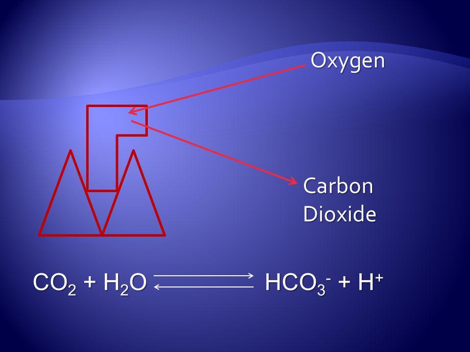 Oxygen Carbon Dioxide CO 2 + H 2 O HCO 3 - + H +