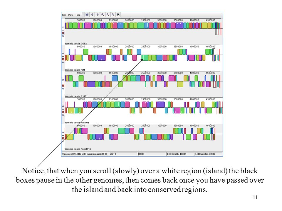 11 Notice, that when you scroll (slowly) over a white region (island) the black boxes pause in the other genomes, then comes back once you have passed over the island and back into conserved regions.