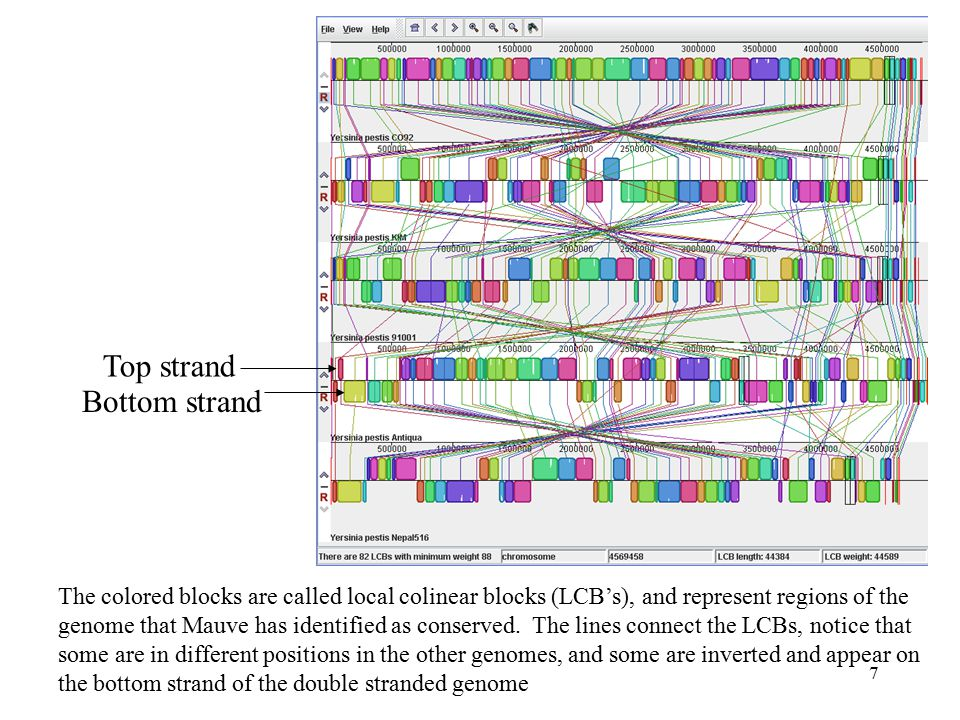 7 The colored blocks are called local colinear blocks (LCB's), and represent regions of the genome that Mauve has identified as conserved.