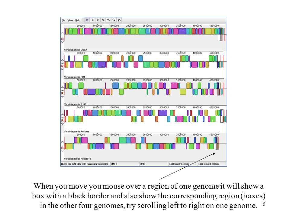 8 When you move you mouse over a region of one genome it will show a box with a black border and also show the corresponding region (boxes) in the other four genomes, try scrolling left to right on one genome.