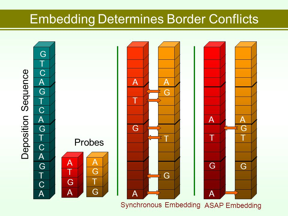 Embedding Determines Border Conflicts A A A C C C T T T G G G A C T G A G T G T G A A Synchronous Embedding A G T A G G T A Deposition Sequence Probes G A A G T A G T ASAP Embedding G