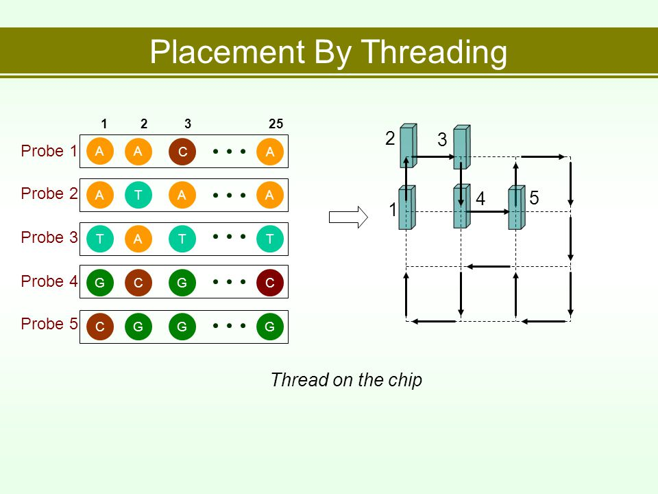 Placement By Threading 12325 TATTATAAA A CA GGCC CGGG Probe 1 Probe 2 Probe 3 Probe 4 Probe 5 Thread on the chip 1 2 3 4 5