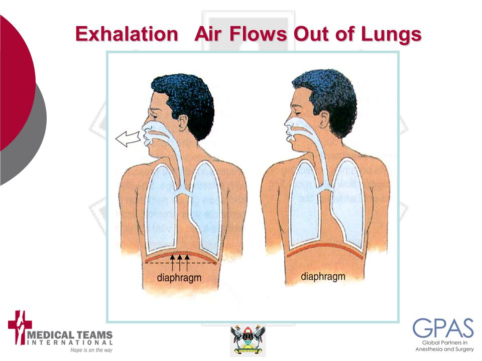Exhalation Air Flows Out of Lungs