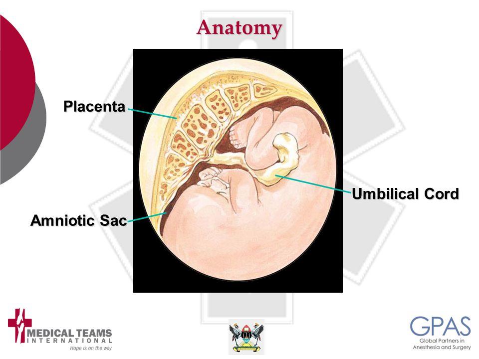 Anatomy Amniotic Sac Umbilical Cord Placenta