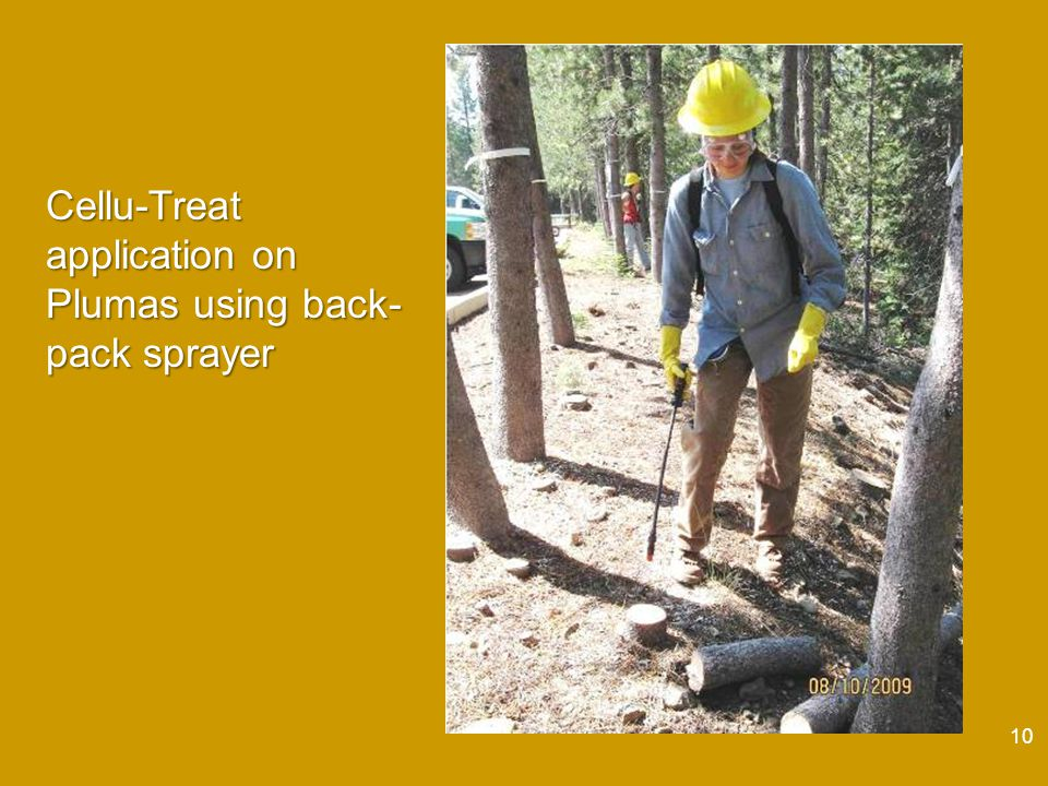 10 Cellu-Treat application on Plumas using back- pack sprayer