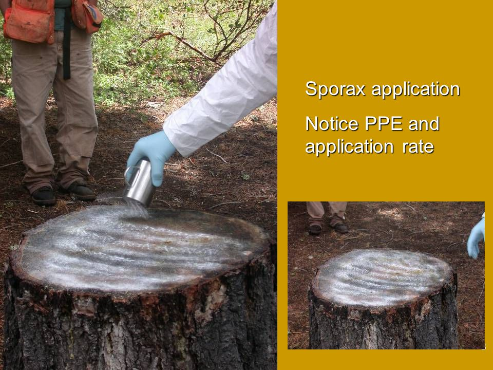 8 Sporax application Notice PPE and application rate