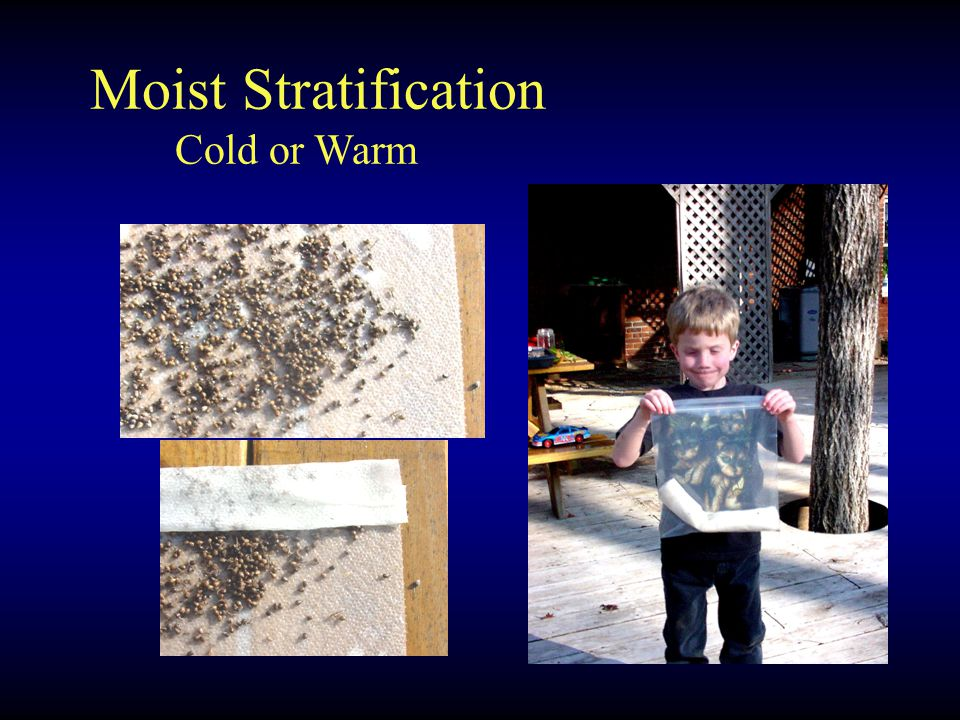 Moist Stratification Cold or Warm