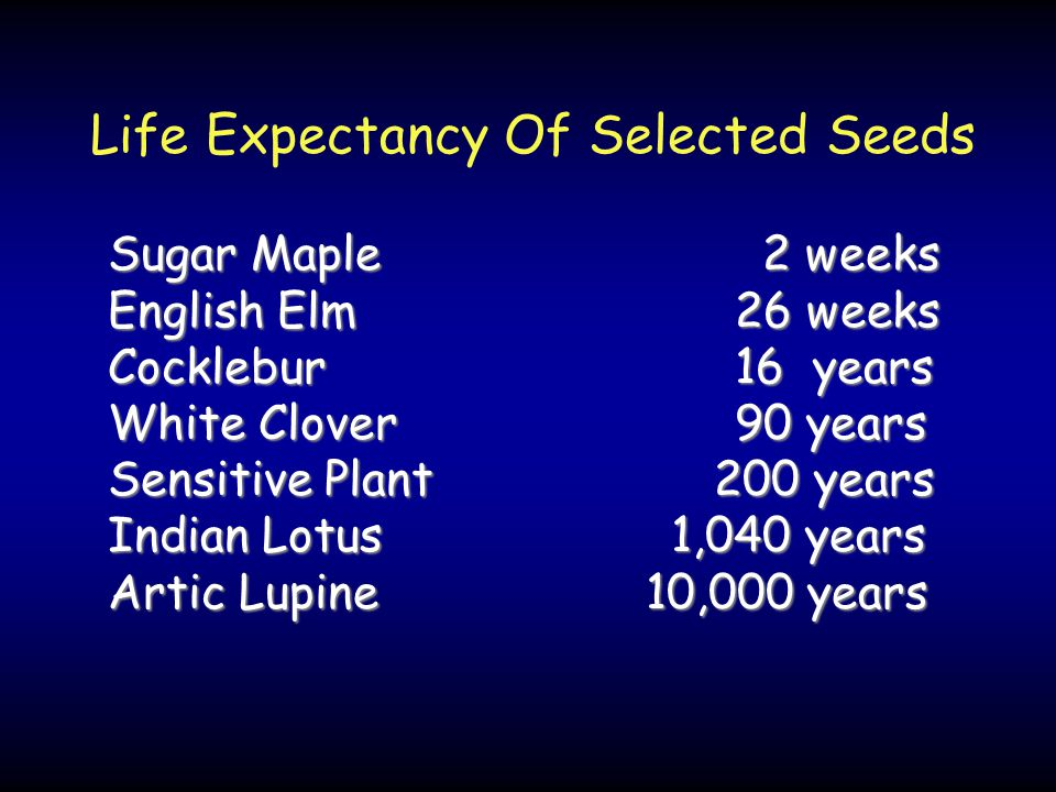 Life Expectancy Of Selected Seeds Sugar Maple 2 weeks English Elm 26 weeks Cocklebur 16 years White Clover 90 years Sensitive Plant 200 years Indian Lotus 1,040 years Artic Lupine 10,000 years