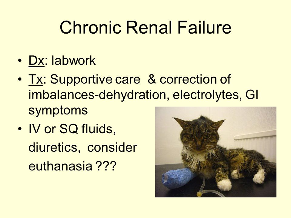 Chronic Renal Failure Dx: labwork Tx: Supportive care & correction of imbalances-dehydration, electrolytes, GI symptoms IV or SQ fluids, diuretics, consider euthanasia