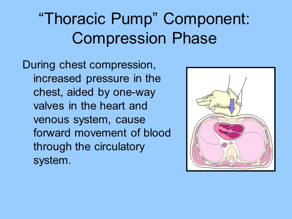 Thoracic Pump Component: Compression Phase During chest compression, increased pressure in the chest, aided by one-way valves in the heart and venous system, cause forward movement of blood through the circulatory system.