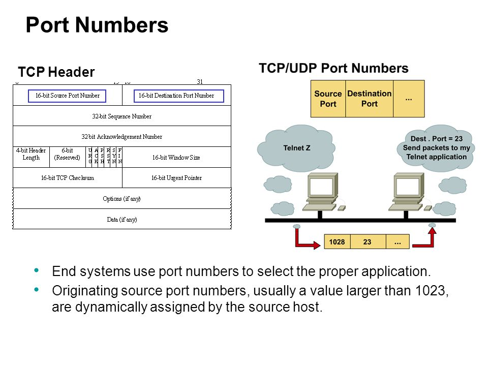 End systems use port numbers to select the proper application. Originating source port numbers, usually a value larger than 1023, are dynamically assi
