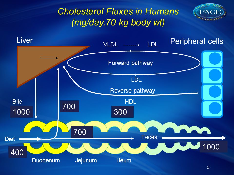 5 Peripheral cells Liver Diet Feces DuodenumJejunumIleum Bile VLDLLDL HDL LDL Forward pathway Reverse pathway 400 1000 700 1000 300 Cholesterol Fluxes in Humans (mg/day.70 kg body wt)