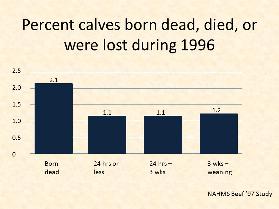 Percent calves born dead, died, or were lost during 1996 NAHMS Beef '97 Study 2.5 2.0 1.5 1.0 0.5 0 Born dead 24 hrs or less 24 hrs – 3 wks 3 wks – weaning 2.1 1.1 1.2