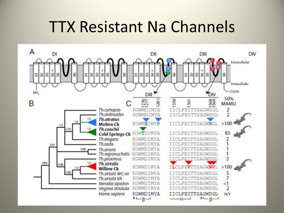 TTX Resistant Na Channels