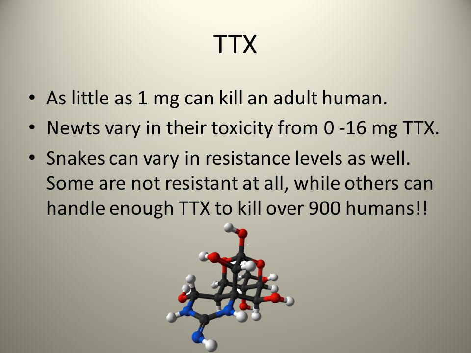 TTX As little as 1 mg can kill an adult human. Newts vary in their toxicity from 0 -16 mg TTX.
