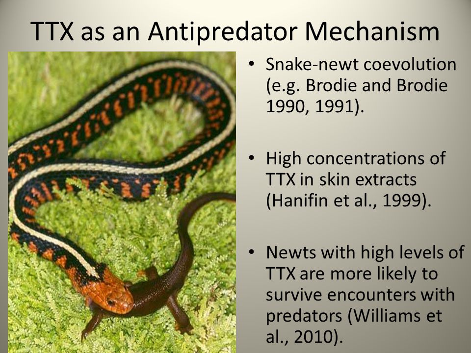 TTX as an Antipredator Mechanism Snake-newt coevolution (e.g.
