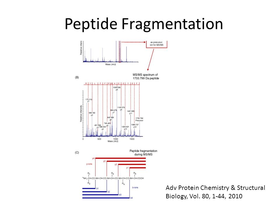 Peptide Fragmentation Adv Protein Chemistry & Structural Biology, Vol. 80, 1-44, 2010