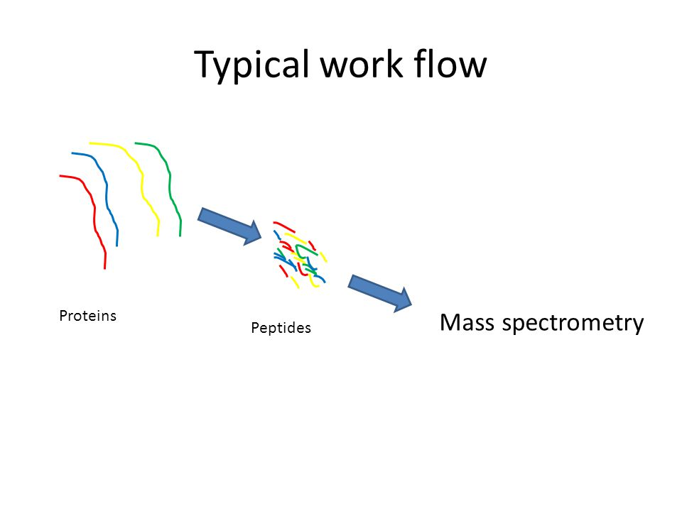Typical work flow Mass spectrometry Proteins Peptides