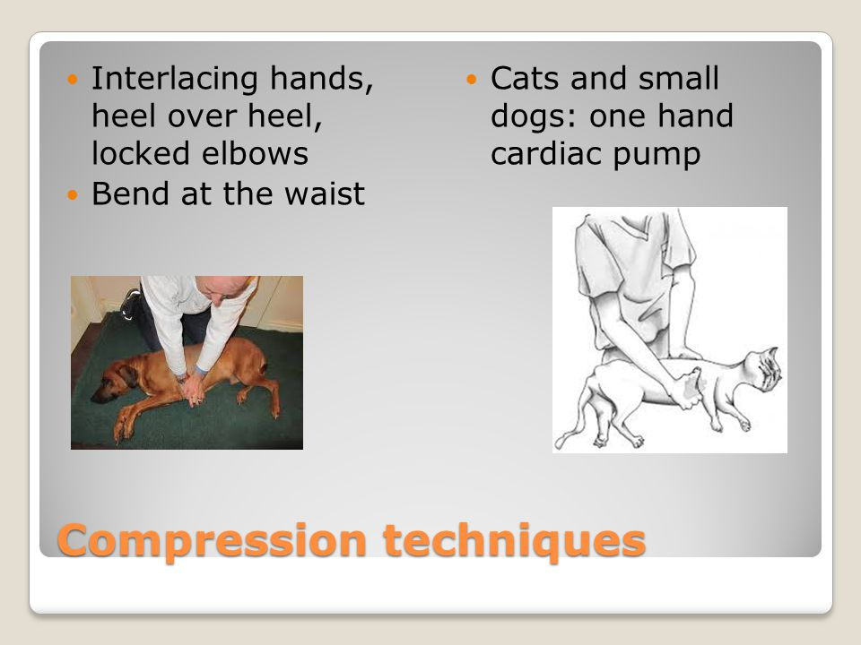 Compression techniques Interlacing hands, heel over heel, locked elbows Bend at the waist Cats and small dogs: one hand cardiac pump