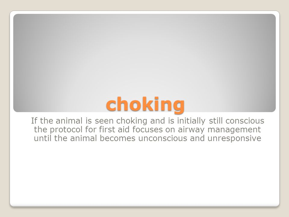choking If the animal is seen choking and is initially still conscious the protocol for first aid focuses on airway management until the animal becomes unconscious and unresponsive