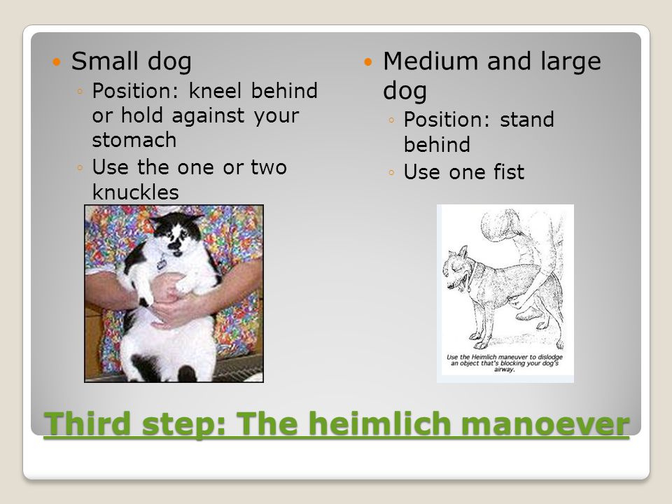 Third step: The heimlich manoever Third step: The heimlich manoever Small dog ◦Position: kneel behind or hold against your stomach ◦Use the one or two knuckles Medium and large dog ◦Position: stand behind ◦Use one fist