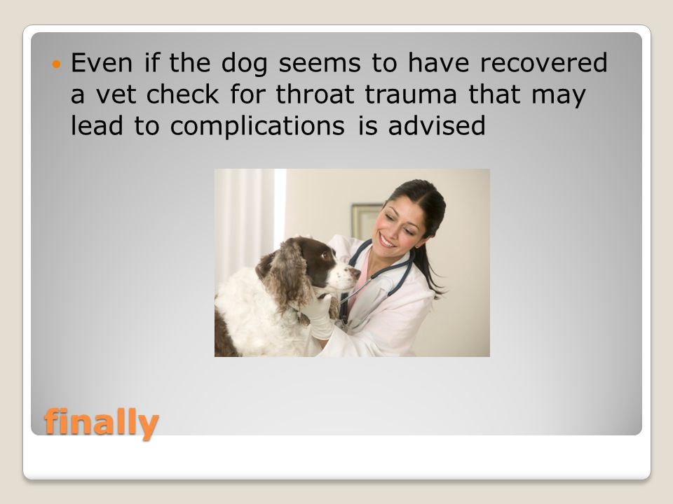 finally Even if the dog seems to have recovered a vet check for throat trauma that may lead to complications is advised