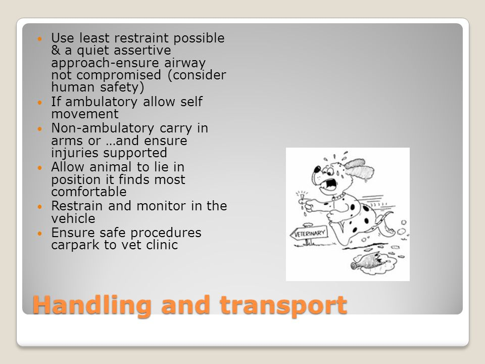 Handling and transport Use least restraint possible & a quiet assertive approach-ensure airway not compromised (consider human safety) If ambulatory allow self movement Non-ambulatory carry in arms or …and ensure injuries supported Allow animal to lie in position it finds most comfortable Restrain and monitor in the vehicle Ensure safe procedures carpark to vet clinic