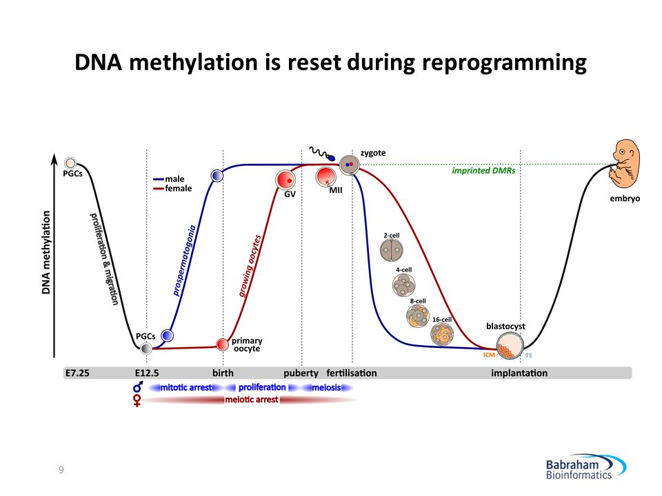 Measuring DNA methylation by Bisulfite-sequencing Image by Illumina 10